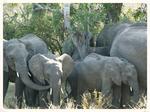 http://suedafrika-lesotho-swasiland.npage.de/top-5-tipps.html
